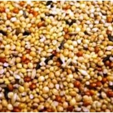 Foreign Finch Seed 3kg