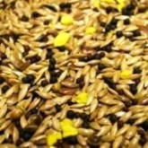 Mixed Canary Seed with Yellow Biscuit 1kg