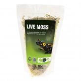 live moss 1.5l