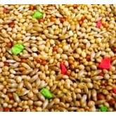 Supreme Budgie Seed 1kg